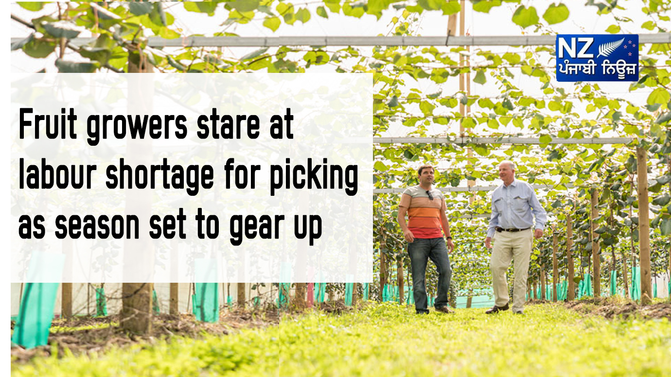 Fruit growers stare at labour shortage for picking as season set to gear up - NZ Punjabi News